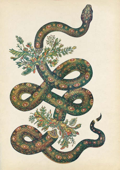 SnakeNature