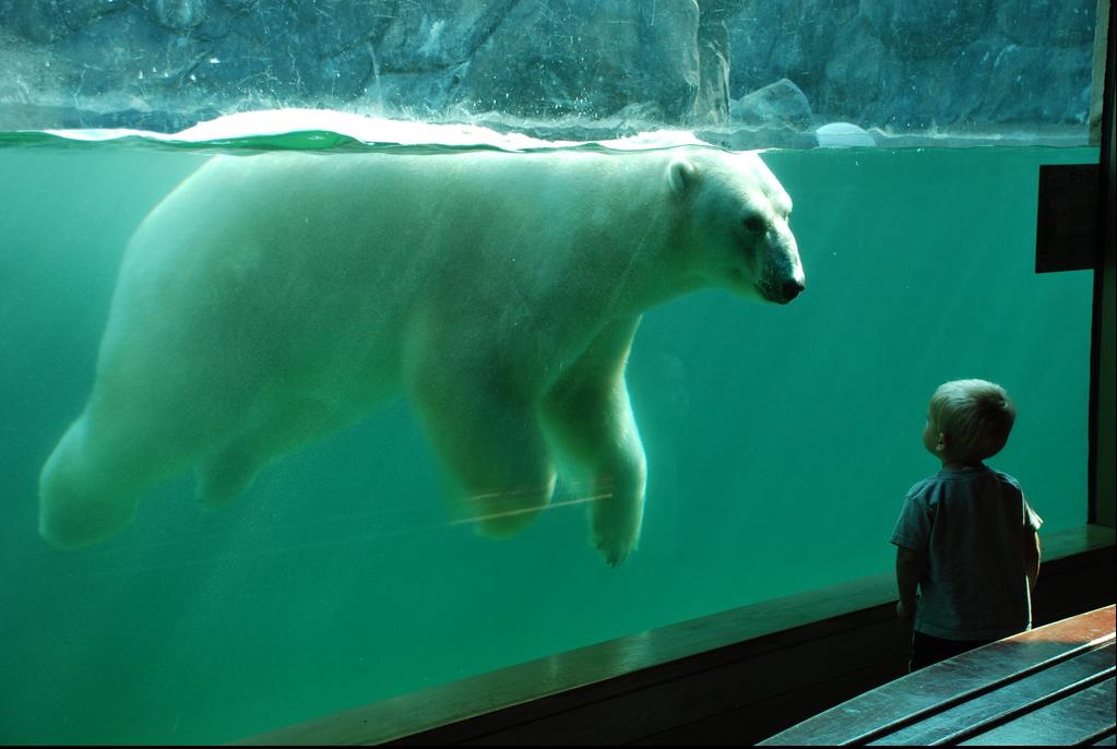Фото белого медведя и человека